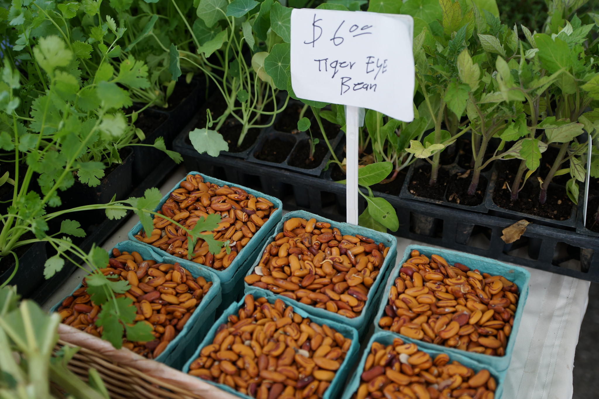 Spring plants and dry beans